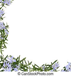 Rosemary Herb Flower Frame