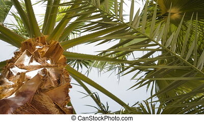 Bottom-up view of a beautiful palm tree with blue sunny sky...