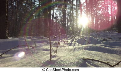 Sun's rays in snowy winter mixed forest.