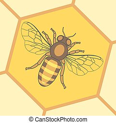 Bee - Illustration of the honey bee insect icon