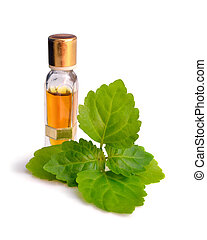 Patchouli sprig with essential oil. Isolated on white...