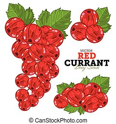 Red Currant Set, Vector.