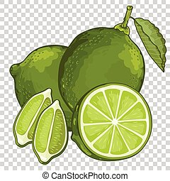 Lime Isolated, Vector. Fruit series. For design packing...