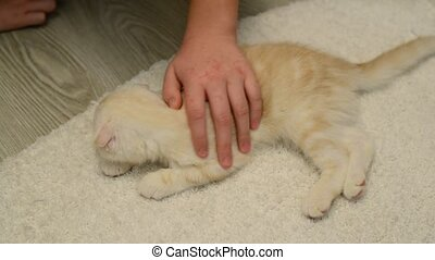 boy with scratches on his hands stroking a kitten