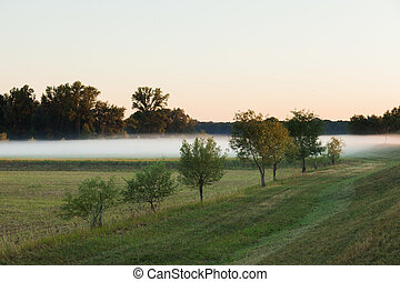 Low hanging layer of fog with trees - Low hanging layer of...