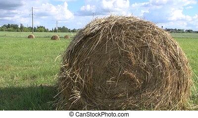 Haystacks in meadow