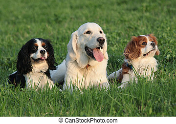 dogs - outdoor portrait of dogs