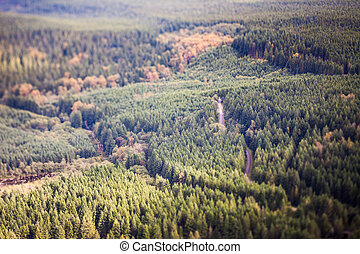 Forest, tilt shift effect - Forest in rural Washington with...