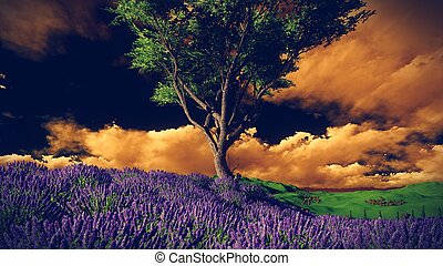 Lavender fields with solitary tree - Lavender fields with a...