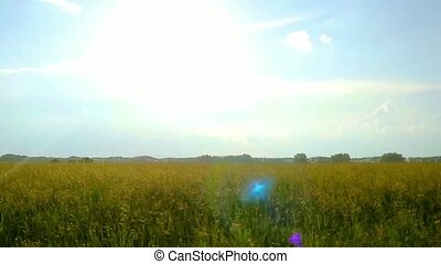 green rural field in a rays of sun in slowmotion