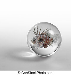 lionfish in crystal ball - a lionfish in a small crystal...
