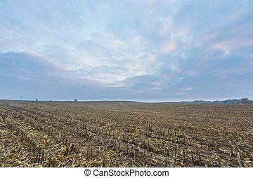 Stubble after corn - Stubble field after harvested corn...