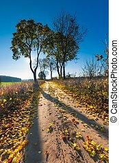 Autumnal rural landscape