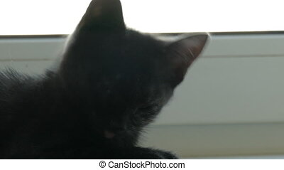 black cat sitting near window at home. He is playing on...