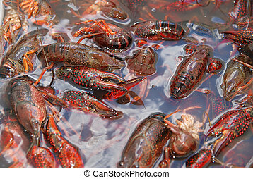 Getting Crayfish ready to boil at a cookout with selective DOF