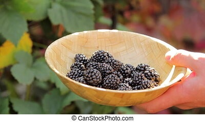Man Putting Blackberry to Bowl - Closeup shot of a wicked...