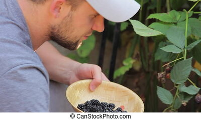 Man Picking Off Blackberry - Closeup shot of a man sitting...
