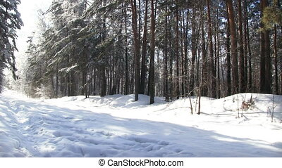 Winter Forest - Pathway in the snowy winter forest