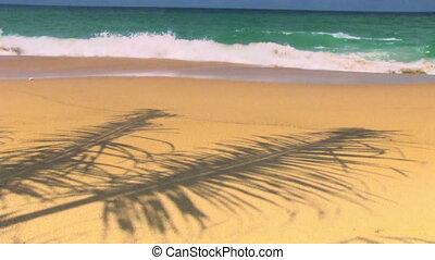 Tropical Beach - Tropical beach with palm tree shadow