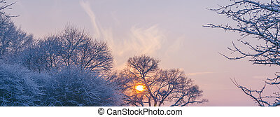 Sunset In The Park - Beautiufl sunset in the winter city...