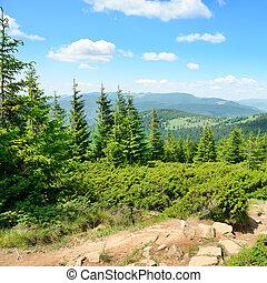 Mountains, träd, höjande