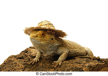 Bearded dragon with hat