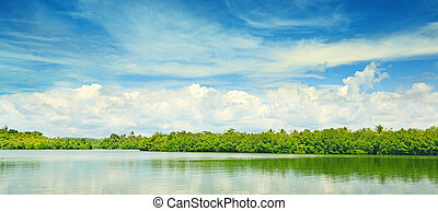 Equatorial mangroves in the lake...