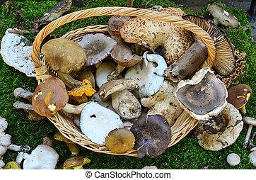 Edible mushrooms - Variety of edible mushrooms in a basket...