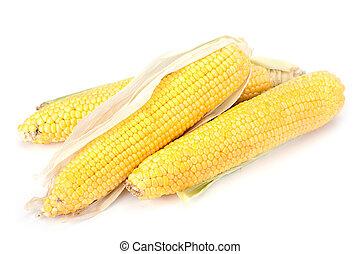 Sweet corn ripe
