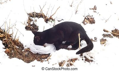 Black Feral Cat eating on the fresh snow
