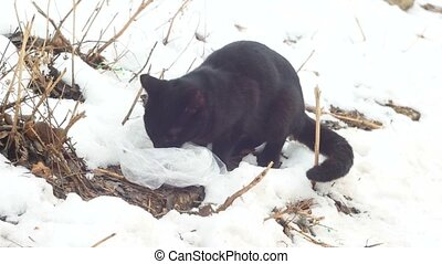 Young black cat eating on snow.  Slow motion.