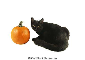 Black cat by Pumpkin