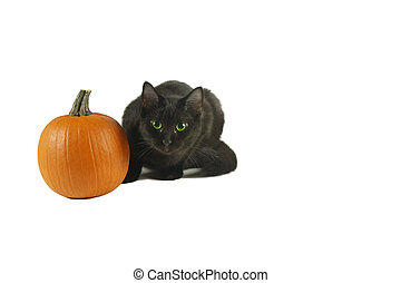 Black cat with green eyes by Pumpkin