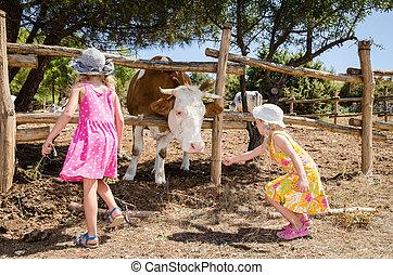 children in the farm - little kids feeding cow in the farm
