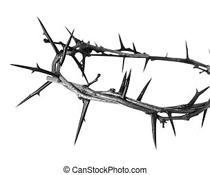 Crown of Thorns isolated on white