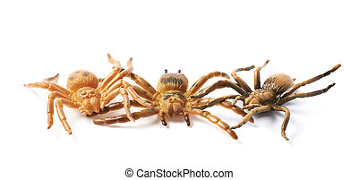 Rubber spider toy isolated - Pile of few fake rubber spider...