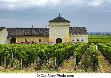 Vineyard in Gironde Bordeaux, Aquitaine - Country landscape...