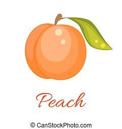 Orange peach vector icon. - Peach isolated vector icon....