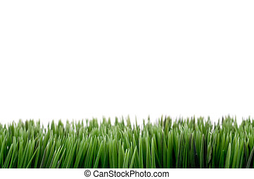 Green grass - Image with green grass at the bottom, white...