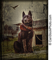 The dog in the village sits tied to a chain. Photos in the...