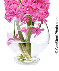 hyacinths in water - bouquet of hyacinths in water from a...