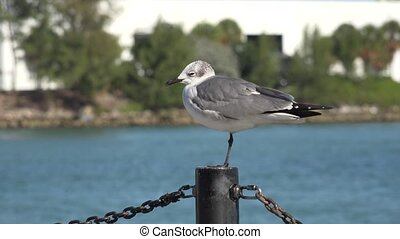 Bird Sitting on Post at Pier
