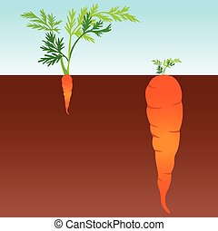 Large and small carrot - Scalable vectorial image...