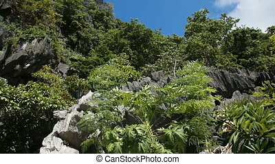 Mountains and rocks with jungle - Mountain landscape on a...