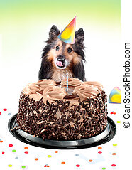 Sheltie birthday cake - Shetland sheepdog or sheltie sitting...