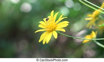 Yellow Flower in Wild