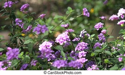 Purple or Fuscia Wild Flowers