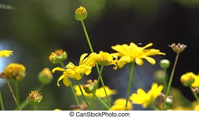 Wild Yellow Flowers and Stems