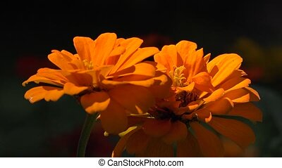 Orange Wild Flowers in Garden