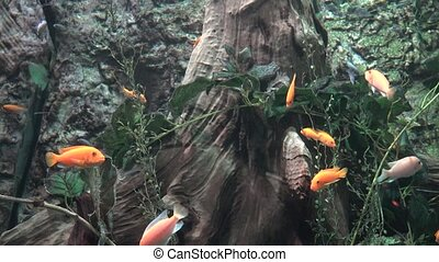 Small Fish in Aquarium